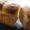 自家製酵母(オーガニックレーズン)元種『食パン』と『チーズナン』レッスンの募集です。